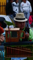(malchileno) Tags: plaza castro musica chiloe chinchinero