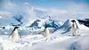 IMG_3747 (ravas51) Tags: blue snow ice penguin antarctica iceberg icebergs adelie adeliepenguin southshetlandislands gadventures