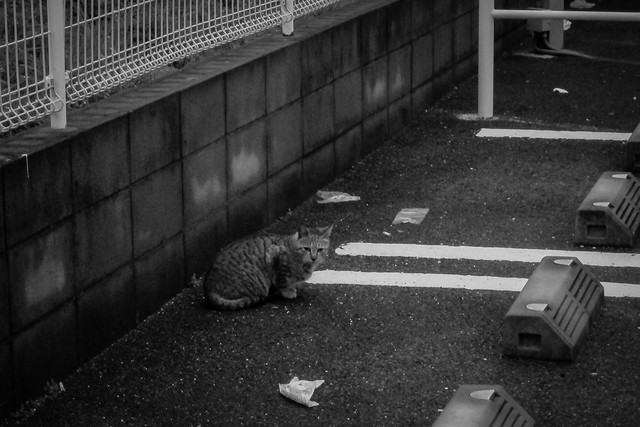 Today's Cat@2013-02-13