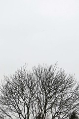 Cloud044 13Feb13 12.18pm (Daisy Waring World) Tags: treesilhouette snowing whitesky