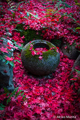 Enri-an Temple, Kyoto, ,  (Akiko Morita) Tags: travel autumn light holiday inspiration plant flower history love nature japan architecture garden landscape photography japanese photo kyoto image gardening vibrant joy picture jardin historic momiji serenity   romantic meditation    inspirational maples  horticulture  japon     sensation             temple            enrian