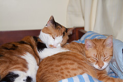 Napping Cats (B.MacLean) Tags: pet pets detail cat canon feline 28135mmis canonef28135mmf3556isusm canon50d