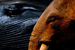 Earth and Sea Giants (Paulo N. Silva) Tags: uk elephant london naturalhistorymuseum bluewhale