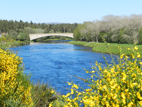 Grantown On Spey United Kingdom  city pictures gallery : River Spey, Grantown on Spey, May 2012 by allanmaciver