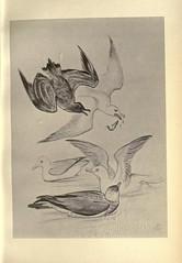 Anglų lietuvių žodynas. Žodis family stercorariidae reiškia šeimos stercorariidae lietuviškai.