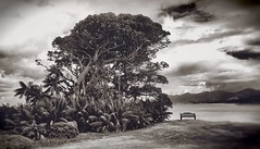 The Overlook, Lord Howe Island (Iksana Imagery) Tags: water monochrome canon island aperture australia lagoon newsouthwales nik banyan worldheritage banyantree lordhoweisland lordhowe 1635mm worldheritagearea niksoftware silverefexpro canoneos5dmkii colourefexpro silverefexpro2 colorefexpro4 worldheritagelistedarea