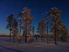 130209_Lappland_52