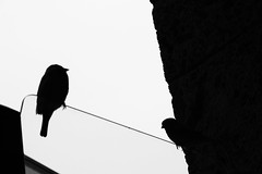 birdline (Maieutica) Tags: city shadow sky bw italy milan bird glass birds italia shadows milano ombra bn ombre line uccelli cielo linea città vetro uccello uccellini passerotti passeri