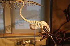 IMG_9959 (Osprey Images, Kingston aka Jean-Guy Pitre) Tags: ottawa dinosaurs fossils museumofnature canadiannaturalhistorymuseum