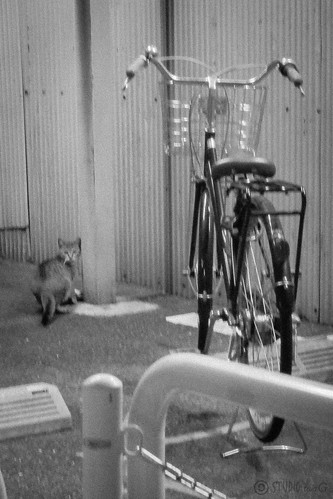 Today's Cat@2013-03-07