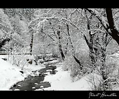 Piatra Craiului National Park, Bran. Romania (.stuart hamilton) Tags: trees winter snow cold water river romania transylvania snowscape bran