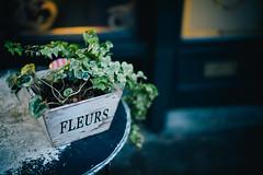 FLEURS. (Crusade.) Tags: street leica uk england plant flower london closeup fleurs 35mm bokeh voigtlander rangefinder nokton rf f12 m9 3512