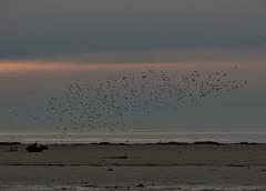 Voli sul mare (imput d'arte) Tags: bird nature landscapes nikon flickr mare natura uccelli volo paesaggio