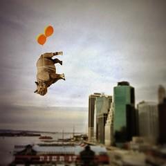 Pier 17 (Janine Graf) Tags: camera city nyc travel silly 6x6 balloons downtown cityscape upsidedown manhattan surreal adventure brooklynbridge rhino artrage whimsical pier17 whiterhinoceros juxtaposer tiltshiftgen janine1968 scratchcam janinegraf myheadweighs800pounds agroupofrhinosiscalledacrashtruestory howmuchdoesmybuttweigh
