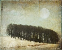 Wintery Woods (Passion4Nature) Tags: trees winter moon snow night woods michigan textures upnorth ie moonseclipse memoriesbook yourpreferredphoto tatot magicartoftextures artistictreasurefinest magicunicornverybest exoticimage textureinfinitebook kurtpeiserexcellence petitmuseekurtpeiser