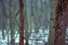 * (anwiphoto) Tags: wood trees winter snow ice nature 50mm eis wald winterlandscape canoneos600d