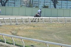 20130405-_DSC4084 (Fomal Haut) Tags: horse japan nikon nagoya 80400mm d4   14teleconverter  d800e