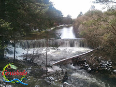 Covaleda, Ruta de los Puentes (Historia de Covaleda) Tags: espaa spain fiesta paisaje douro pinos soria historia pinar tradicion duero covaleda