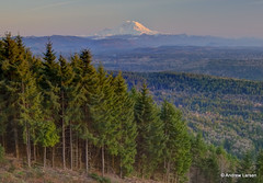 Rainier Front and Center (papalars) Tags: sunset washington mtrainier tigermountain themountain poopoopoint papalars andrewlarsenphotography