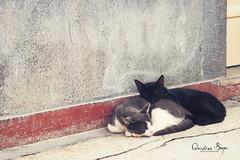 Sleeping Cats (Christina Beyer) Tags: sleeping cats brasil cat brasilien katze schlafend katzen