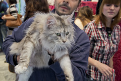 Cats in Show 2013 (Robyproxy) Tags: show mostra cats roma cat main coon eur gatto gatti 900 persiano birmano spazio felina novecento norvegese 2013 abissino