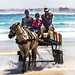Senegal Daily Scenes: Chariot Riding
