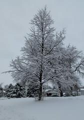 Spring in Nebraska, Wayne (ali eminov) Tags: seasons snow ice trees months april hailstorm snowstorm wayne nebraska winterscapes