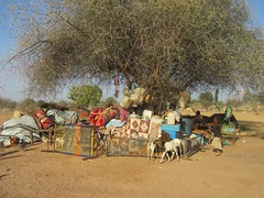 UNHCR News Story: UNHCR starts moving displaced families from Darfur to safer areas of Chad (UNHCR) Tags: africa unicef family trees camp news water children women chad refugees sudan border security help aid health arrival shelter darfur information protection hygiene assistance registration unhcr distribution sanitation wfp newsstory salamat civilians newarrivals sudaneserefugees tensions tissi westdarfur nonfooditems fightings unrefugeeagency unitednationsrefugeeagency misseriya theworldfoodprogramme hostcommunities gozamercamp theunchildrensfund umdukhun sterena sudaneserefugeesfromdarfur