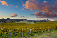 Harvest Time (tagakodak) Tags: california county wood las sunset red orange green fall colors grass clouds fence wooden vineyard vines wine country sonoma hills valley grapes bayarea napa amigas hdr carneros ramal photomatix duhig msoriano msorianophotography