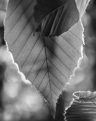 _DSC5797 (Lightsight FMS) Tags: blackandwhite bw nature monochrome digital nikon outdoor d300s