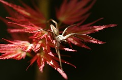 in the spotlight (Sandra Schmid ) Tags: macro animal garden spider spotlight spinne tamron90mm pentaxk30