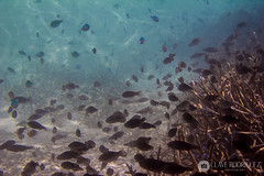 Maldives - Reef of Holiday Island [Dhiffushi] (Clave Rodriguez) Tags: travel vacation fish tourism animal animals islan
