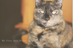 Pocket of light..... (austinsGG) Tags: cat canon eyes feline 85mm naturallight snickers tortie imacaticanfindsunanywhere