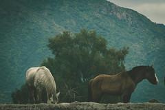 III (Jonhatan Photography) Tags: horse nature animals canon explorer vsco