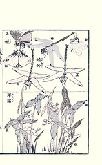 Bottom  Chinese arrowhead (Japanese Flower and Bird Art) Tags: flower art japan japanese book chinese picture hokusai arrowhead woodblock katsushika ukiyo sagittaria alismataceae trifolia readercollection