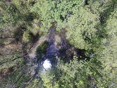 Marsh forest (CyberMacs) Tags: air skyphotos phantom3 outdoor aerial istanbul turkey trkiye forest tree lake marsh fen moorland morass slough