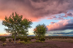 Sunset in Pink (inlightful) Tags: sunset sunrise evening morning clouds monsoon sky nature weather rain virga southwest desert newmexico trees socorrocounty dirt dirtroad rural
