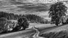 La ferme comtoise au milieu du payss horloger (MrMyz) Tags: bw france franchecomt nb rmyb arbre blackwhite blackandwhite campagne canon chemin ciel eos eos5d exterieur hautdoubs landscape matin monochrome montagne morteau mountain mrmyz nature noirblanc noiretblanc nuages outdoor payshorloger paysage region road route solitude solo sunset tree valdemorteau