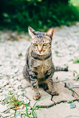 Byrd at School. Hopefully, it won't be long now that we will reunite (norsez {Thx for 13 million views!}) Tags: 40mm apsc cmos fujifilm raw xpro1 xtrans cat classic cute domestic fastlens feline fuji fujixpro1 fujifilmxpro1 kitten kitty lens m mackerel manualfocus meow mohammed neko nokton pussy school siamese stray tabby tomcat voightlander xp1 vsco mirrorless lightroom art colorful beautiful light vscofilm life fujifilmcamera
