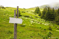 Forest sign in the form of an arrow (Simeo Donov) Tags: advertise advertisement advertising announcement arrow background blank board bulgaria communication country day ecology empty environment environmental fog forest frame grass green hiking indication information lawn meadow message mountain natural nature outdoor park part path plate post rural sign signboard space spruces tourism trail trees vegetation verdure way white wood wooden