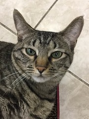 Molly May - 1 year old spayed female