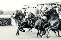 go (feldweg) Tags: ostseemeeting doberan baddoberan galopp galopprennen race racehorses horses horserace cheveaux koni hest cheval horse pferd pferde rennen 2016