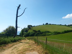 Southwest Coastpath Devon (Hugo D'luvly) Tags: southwestcoastpath devon uk england olympus zuiko 918mm dawlish teignmouth e520