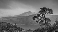 rain sweeping over Glen Affric (pixellesley) Tags: scotland glenaffric winter rain cold wet windy mountains snow trees landscape mono blackandwhite lesleygooding
