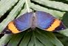 K46A8086 (Yvonne23021984) Tags: schmetterling butterfly hamm germany deutschland maxipark markro photography macrophotography canon canonphotography markofotografy canoneos7dmarkii insects insekten nature naturfotografie naturephotography closeup colorkey schmetterlinge butterflies