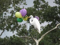 Happy Birthday (Mel's Looking Glass) Tags: birds balloons wildlife birthday