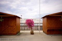 PLW_5539 (Laszlo Perger) Tags: wien vienna österreich austria blumengarten hirschstetten flowergarden