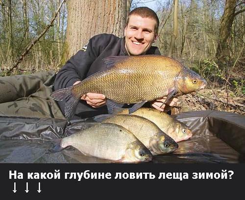 какая рыба клюет на манку с ревитом