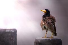 - (Li Jen Jian) Tags: bird nikon d800 tamron sp af 150600mm f563 vc usd a011n