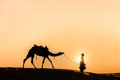 Sam Sand Dunes , Jaisalmer, Rajasthan, India (dinesh.I) Tags: travel light sunset india silhouette sand nikon desert dunes ngc camel nikkor jaisalmer rajasthan cwc travelindia northindia d600 travelphotography herdsman thardesert incredibleindia samdunes samvillage chennaiweekendclickers dineshi nikon1635mmvr dineshbabui rangderajasthan dineshiphotography